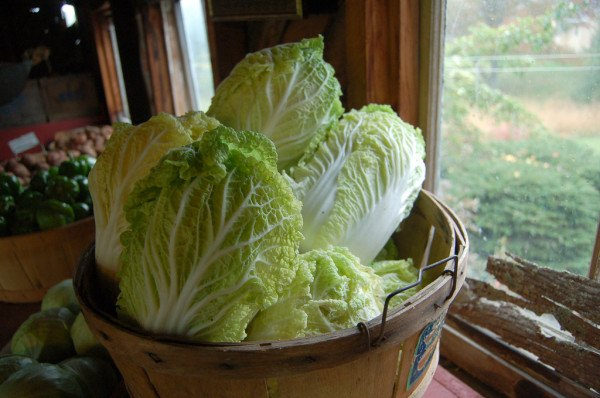 Napa cabbage for Mediterranean diet