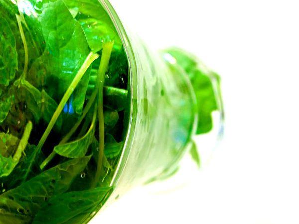 spinach and barley salad