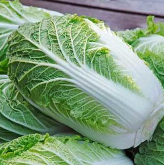 Napa Cabbage for Chicken Walnut Salad
